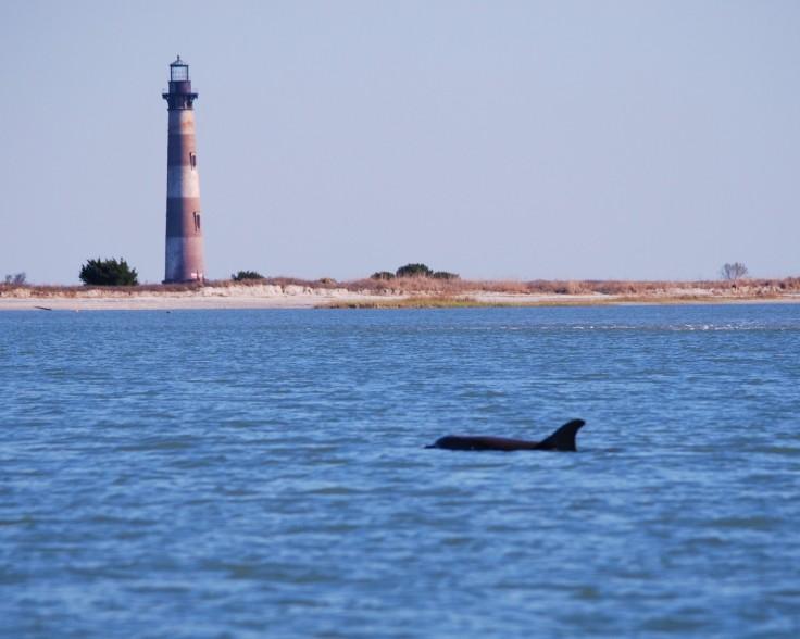 morris_island_dolphin_lighthouse_ocean_sea_water_sea_life_beach-1339386