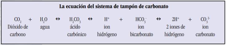 Tampón carbonato